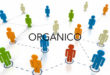 Organici di fatto: disponibilità prima delle operazioni di utilizzazione/assegnazione provvisoria